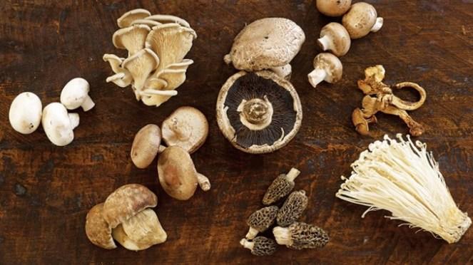 mushroom_poster_spread_780-491322a3