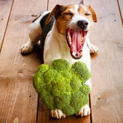 anti-cancer-broccoli